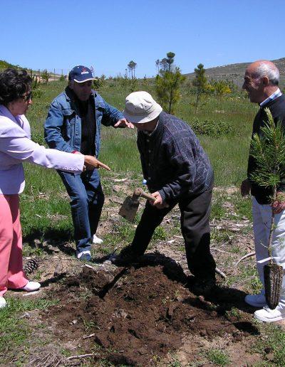 Actividades de reforestación